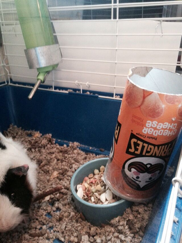 lower chinchillas height new bin or pig space length width guinea bowl supplies ideal rabbits rabbit hay animals animal product small pigs for is a saving layer other feeder food blue