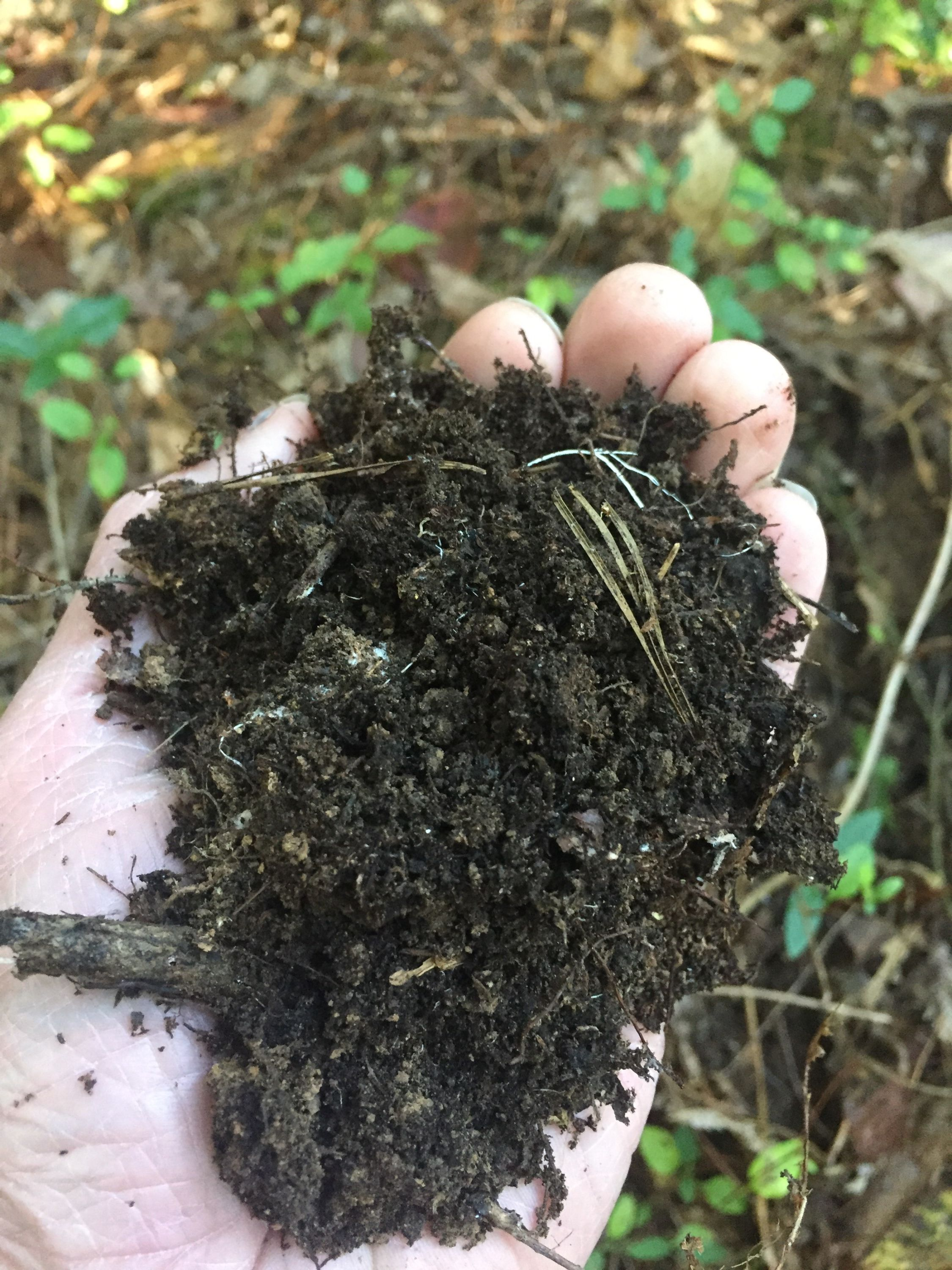 Leaf Mold The Absolute Easiest Way To Improve Garden Soil With
