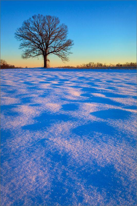 Carpet of Light : Hadley, MA : Patrick Zephyr Photography