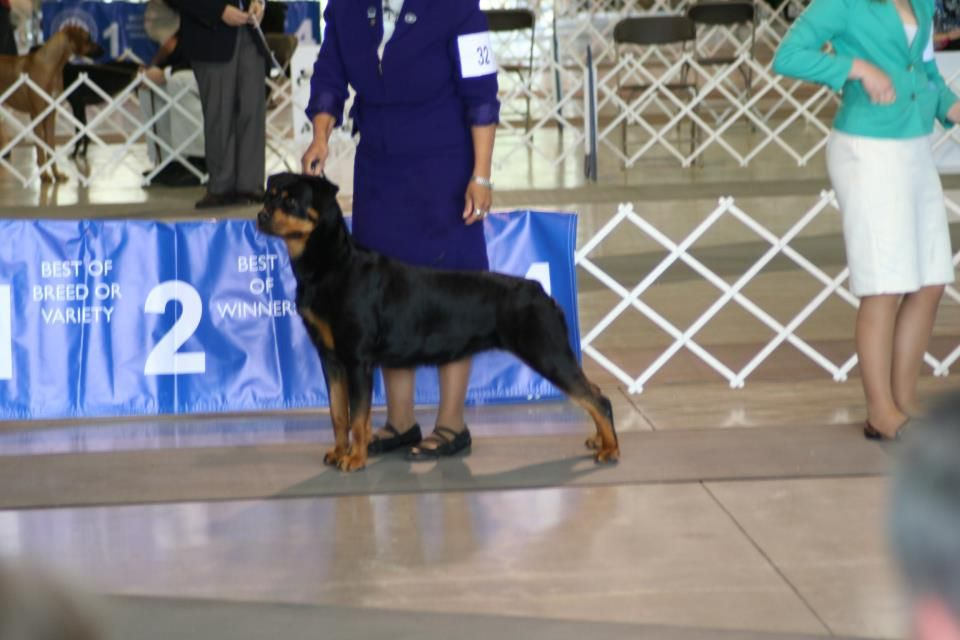 Lucia With Her Breeder Kimberly Cardona At An Akc Show In Lakeland