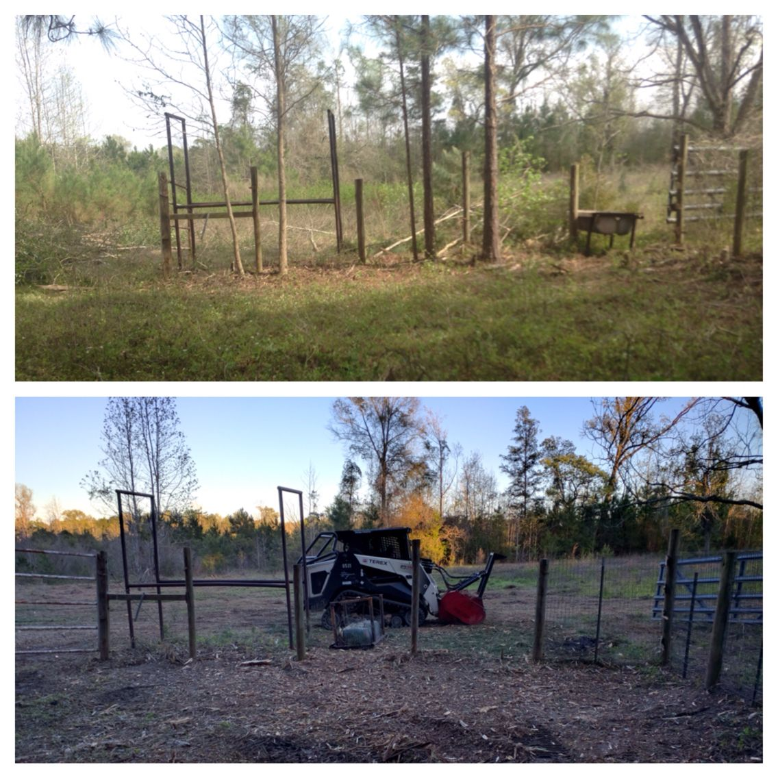 Before and after mulching check out alternative brush