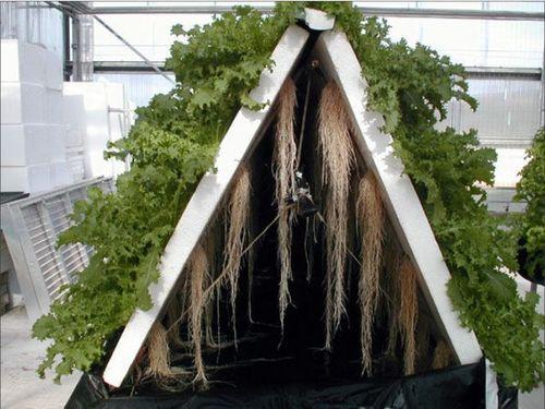 Aeroponia Cultivo De Plantas Con Agua Y Aire Agricultura
