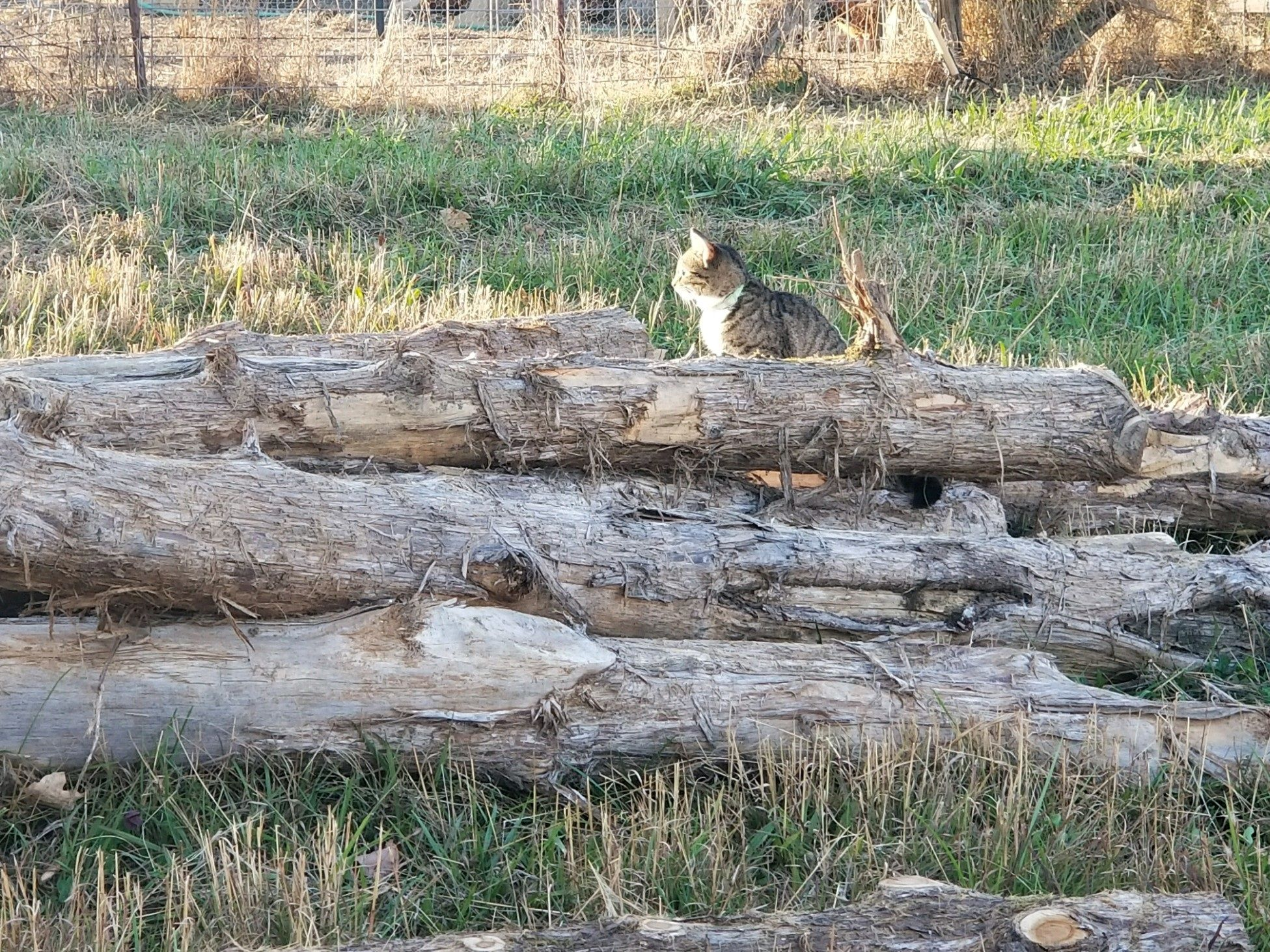 House Cat Sitting On Pile Of Logs