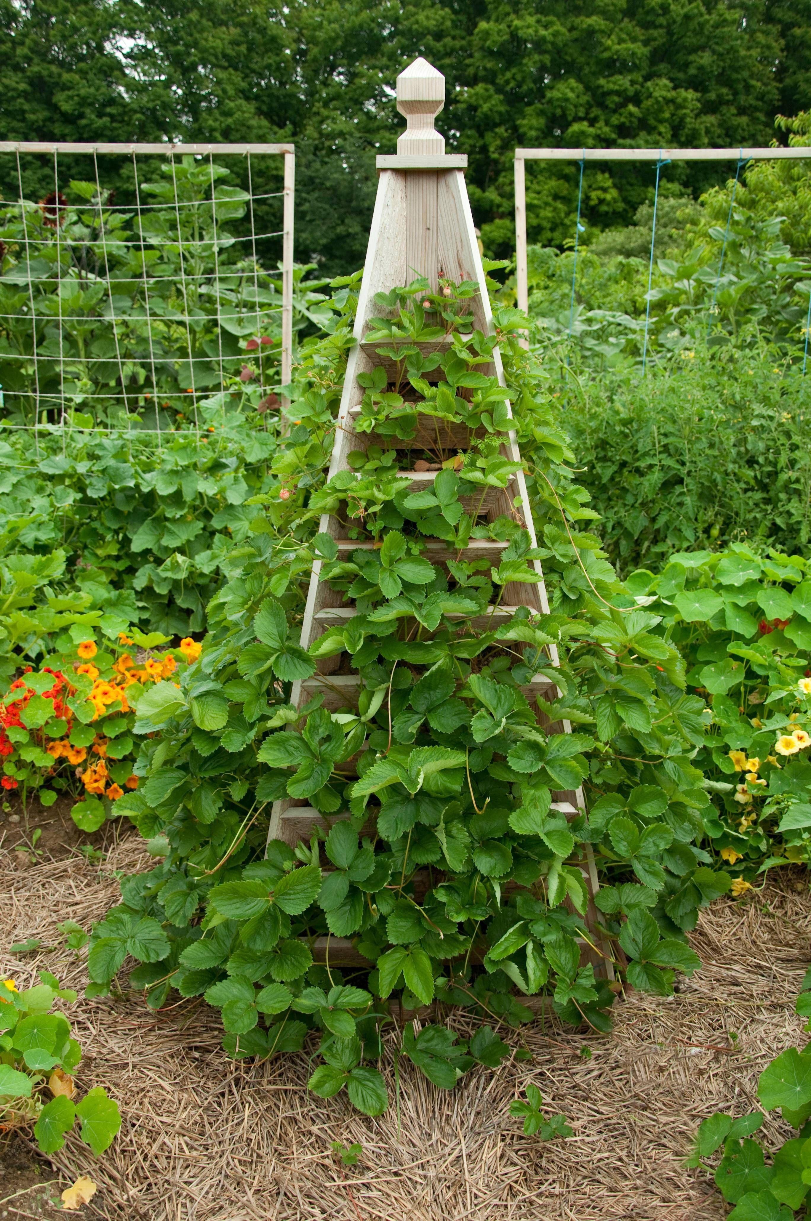 strawberry trellis photo by ali kaukas from the plete kitchen