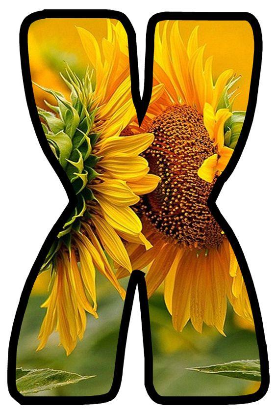 Buchstabe - Letter X | Alphabet, Sunflower, Flowers