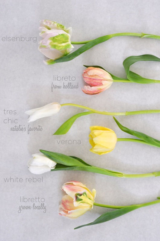 Blooms In Season March From Caitlin Flemming In 2021 Easy To Grow Flowers Bloom Tulips Arrangement