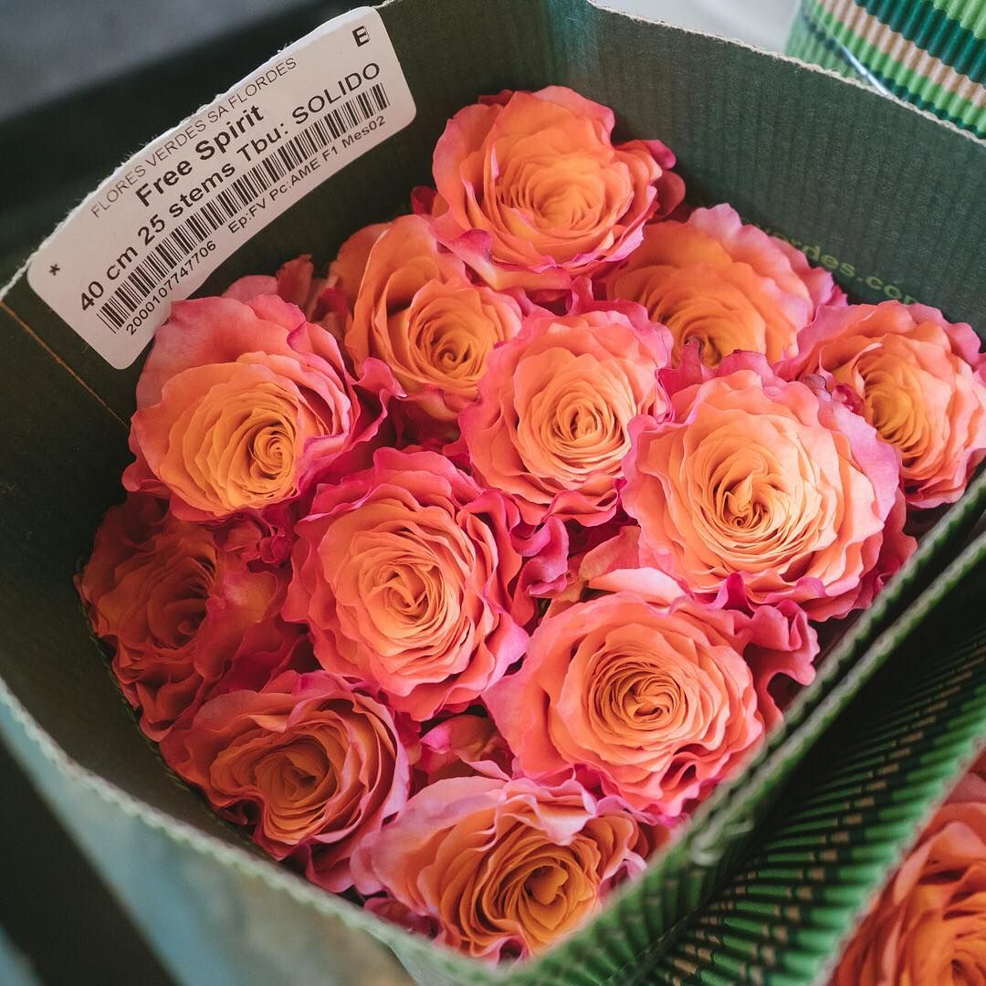 Set your spirit free with some colorful Free Spirit roses