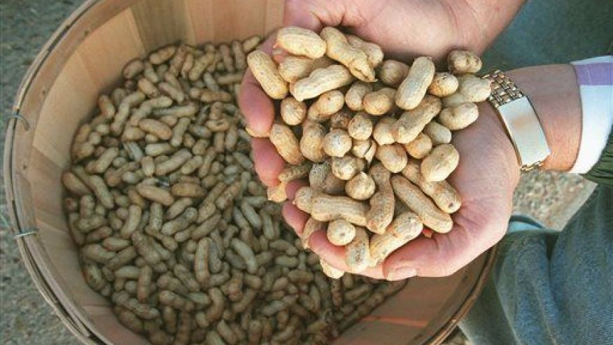 Peanuts and other nuts are good for you after all--here's why