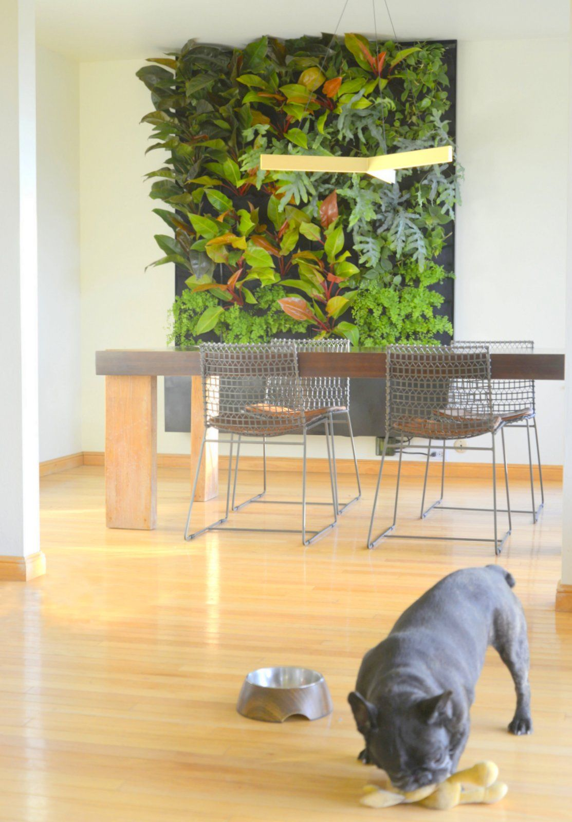 Phils and Ferns Vertical Garden | Living walls, Fern and Live art