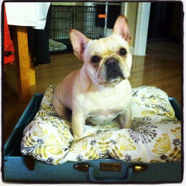 Vintage suitcase dog bed! Made pillow and beds in a little over an hour!