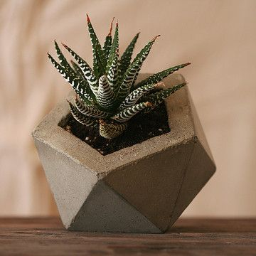 Love this concrete planter from Andrew Stuart. So unique! Idea for Grandpa Winter. Andrew says he will need to seal it.