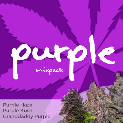 Purple Mixpack Pinterest