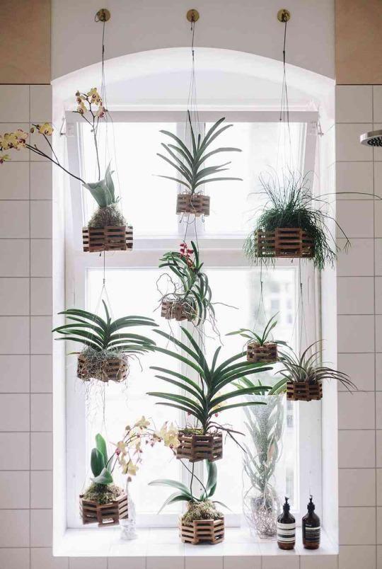 A Bathroom Window Garden Installation Apartment Plants Air Plants Decor Window Plants
