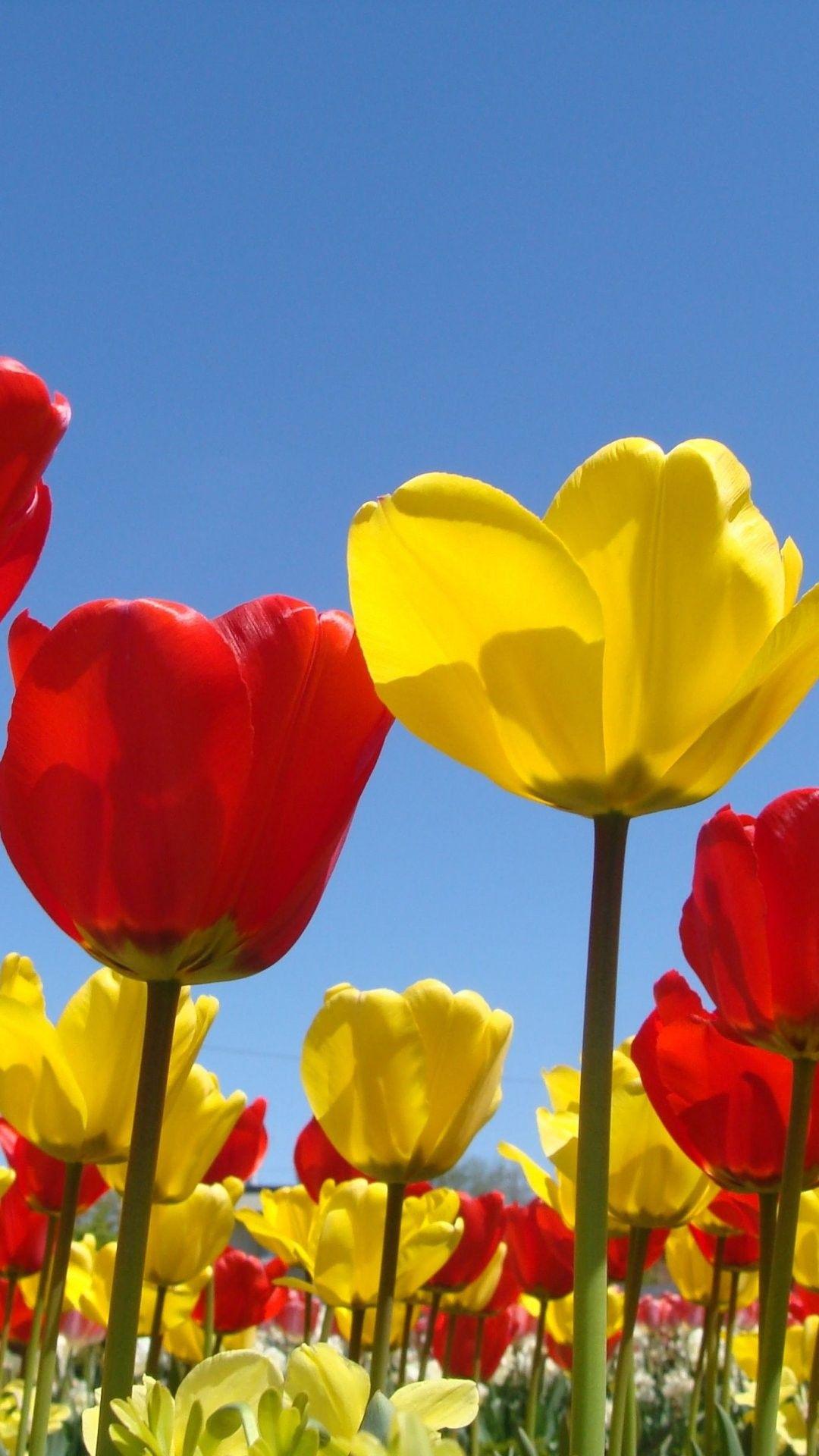 Spring Flowers iPhone 6 Plus Wallpaper 14132 Flowers