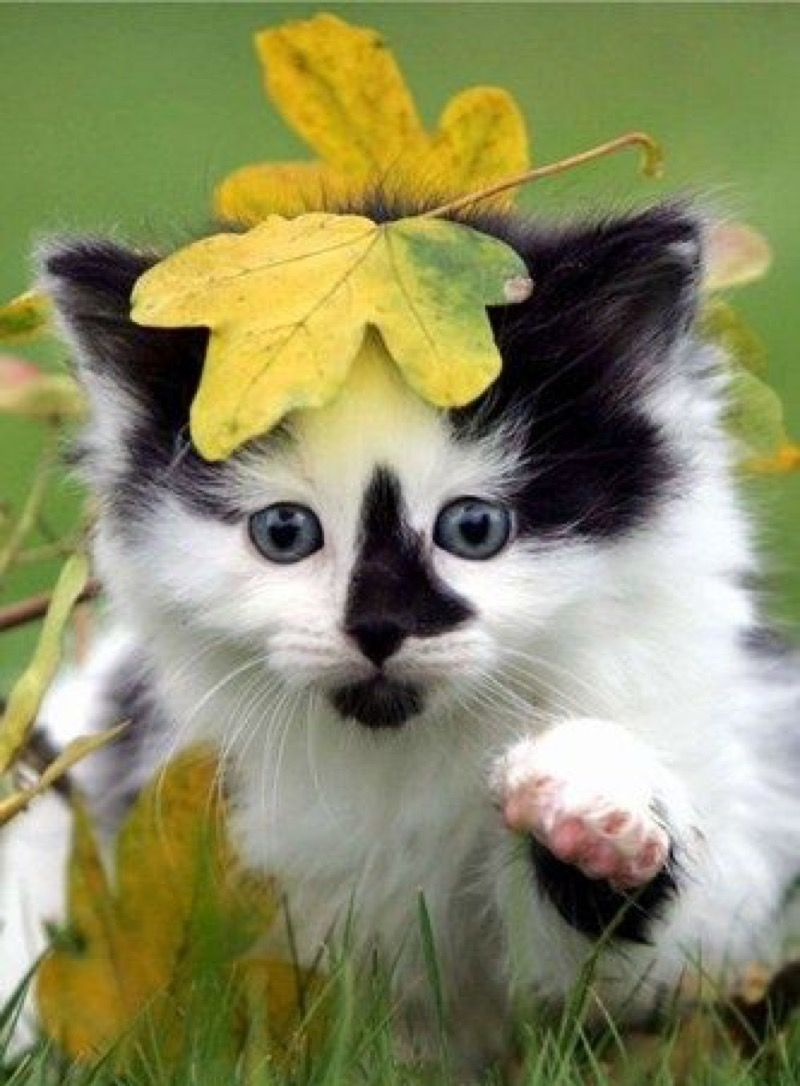 Today's cute kitten is a real beauty……