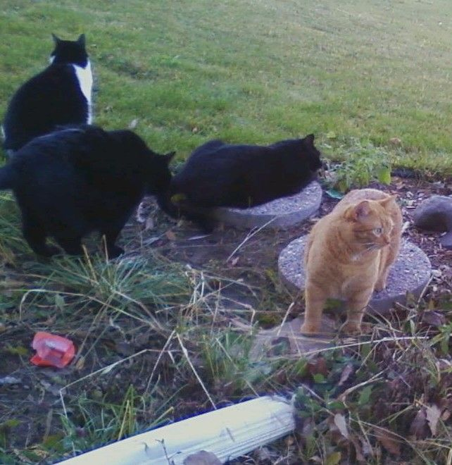 play-time in the flower bed- Alley, Charlie, Rico and Katy