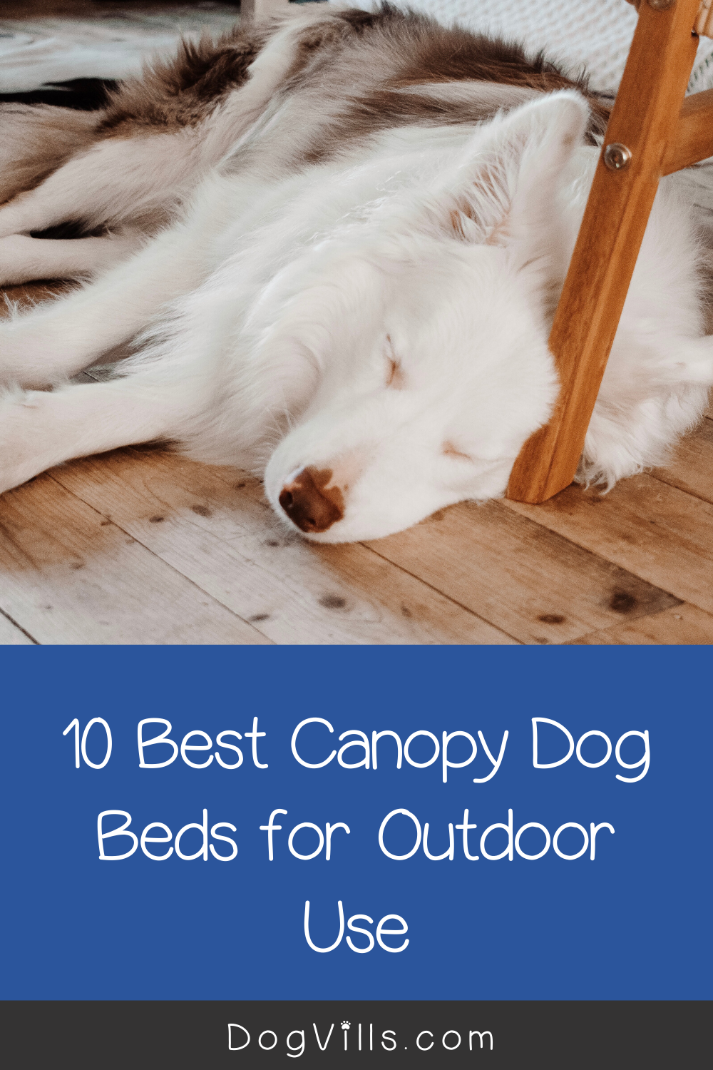 10 Best Canopy Dog Beds For Outdoor Use In 2020 Dog Canopy Bed Dog Bed Elevated Dog Bed