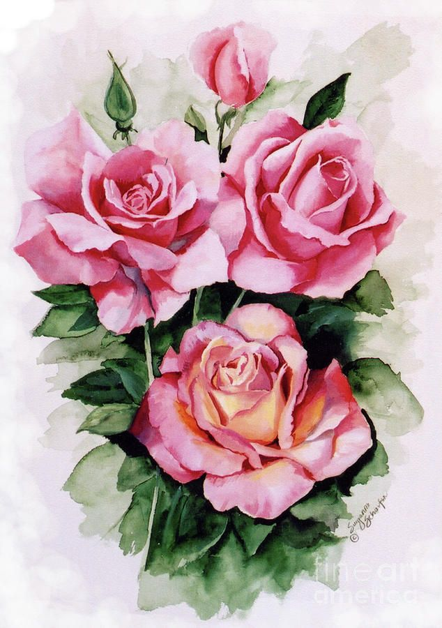 watercolor rose flowers pink gorgeous ink