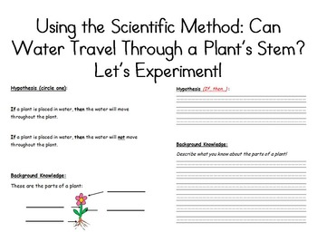 image about Celery Experiment Printable Worksheet identify Uncomplicated Science Experiment: Can H2o Push Throughout a