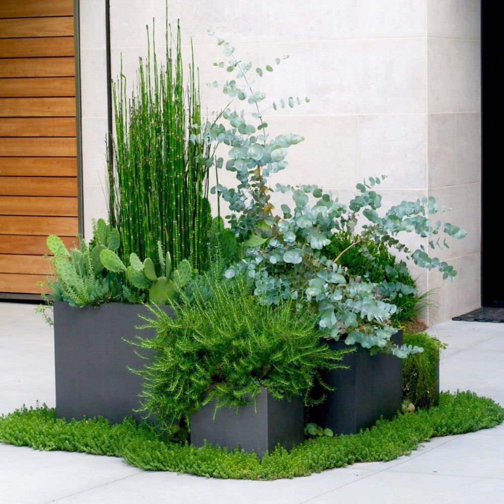 9 Modern Container Gardening Ideas  Patio container gardening