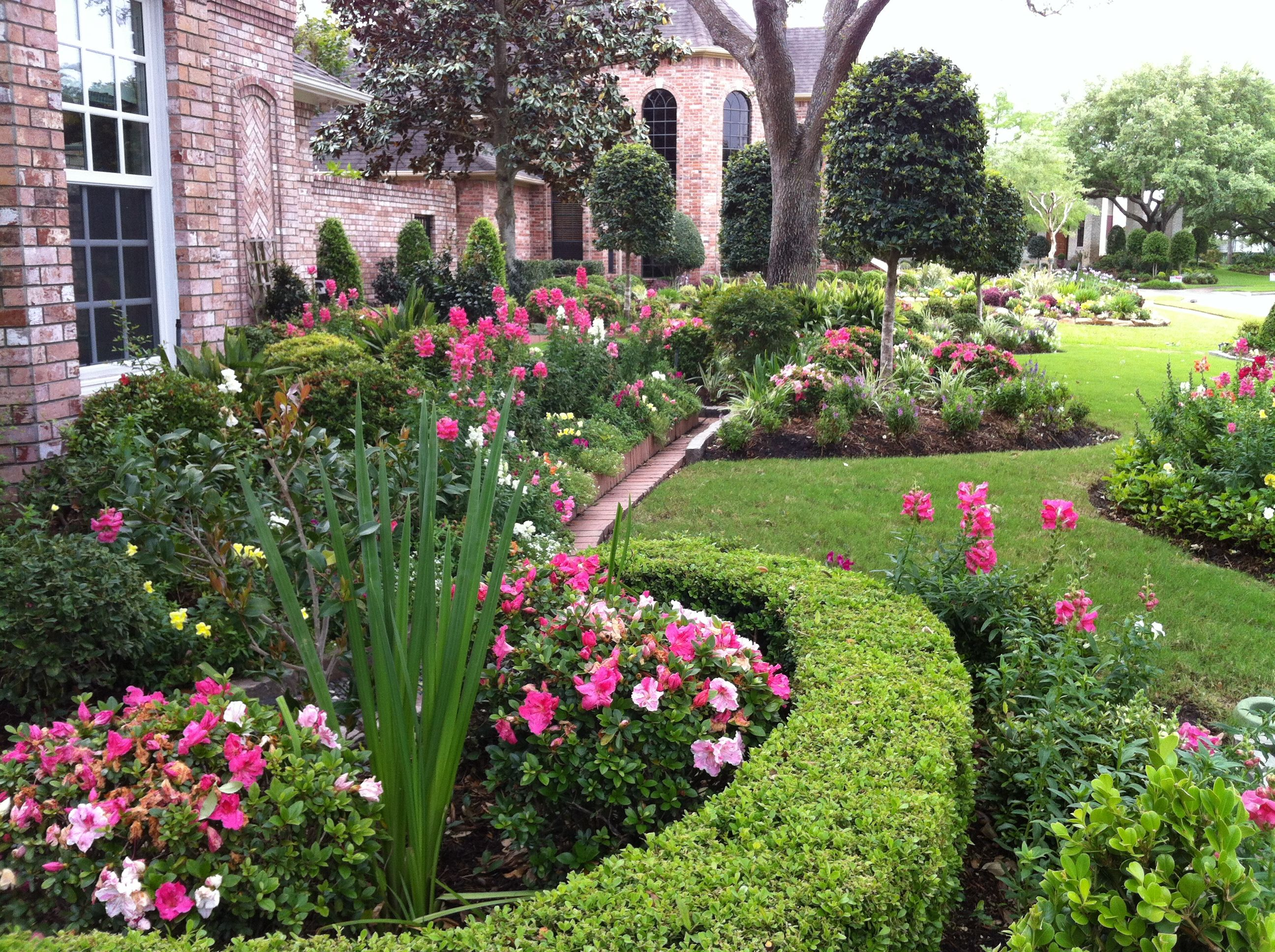Residential flower gardens - Ornamental Boxwoods Help Shape The Beds While Conversation Piece Azaleas Produce Beautiful Blooms 3 To 4