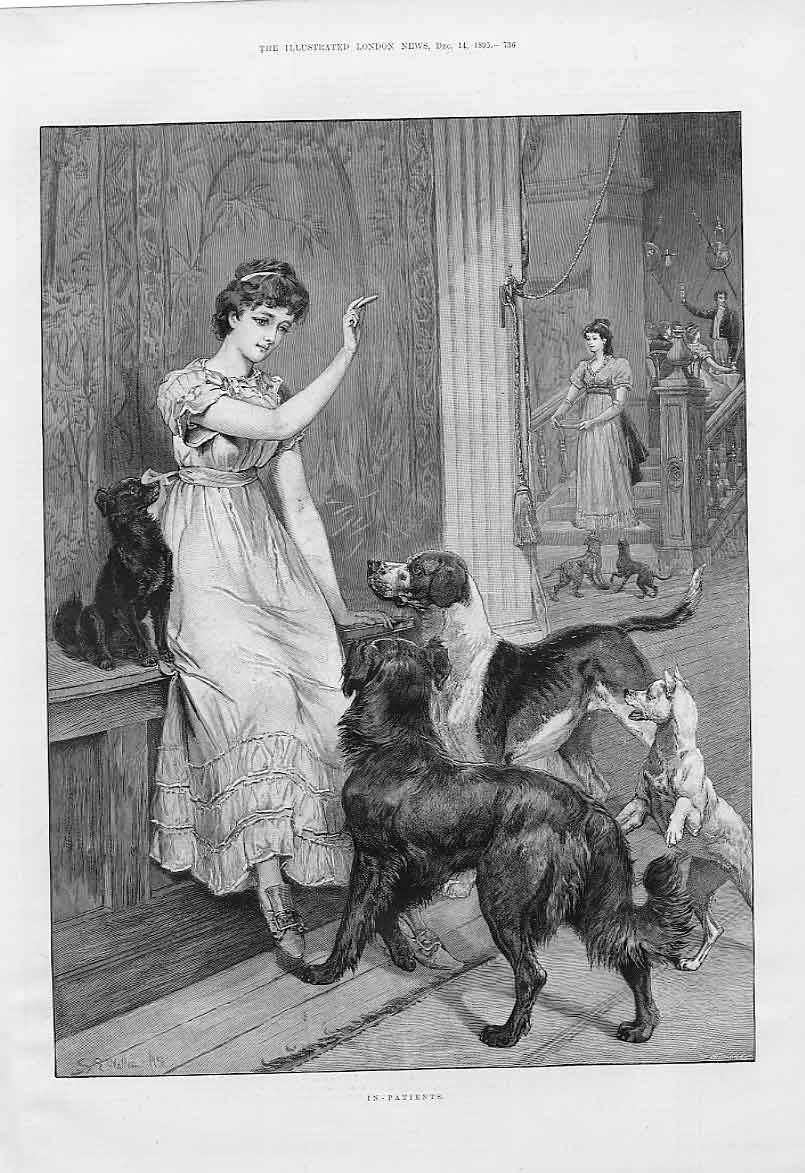 victorian dog lady the illustrated london news