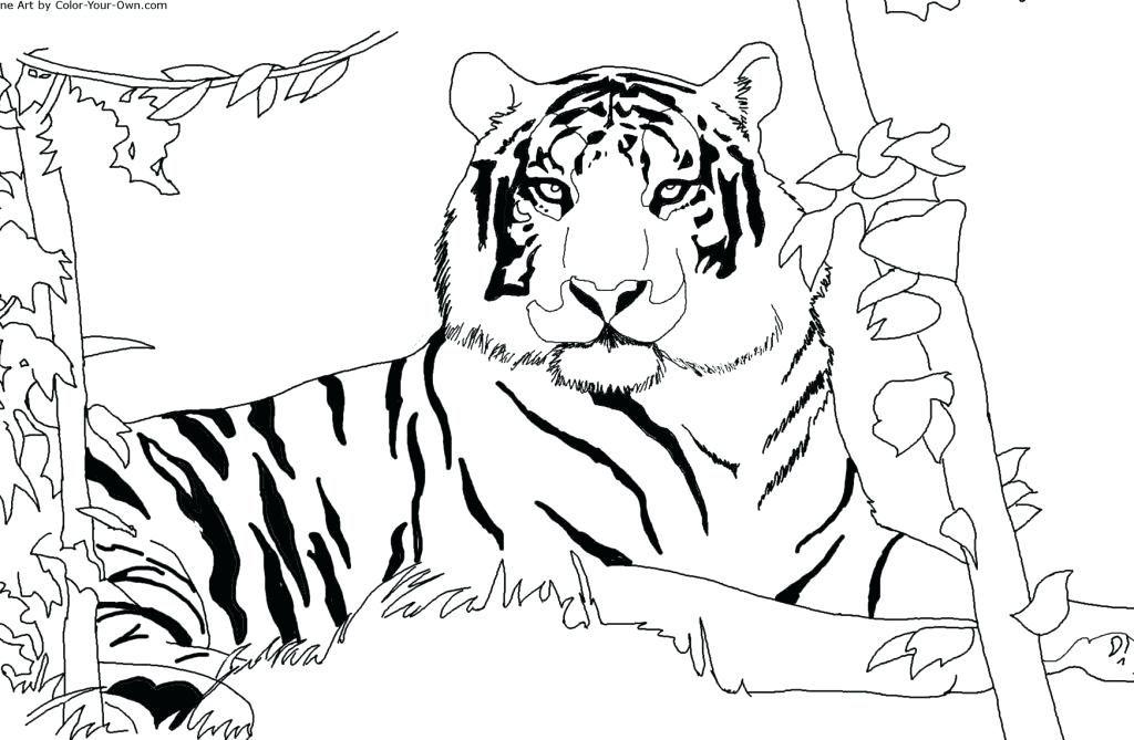 Uomo Tigre Da Colorare.Risultati Immagini Per Disegni Colorare It Uomo Tigre Disegni Da Colorare Disegni Tigre