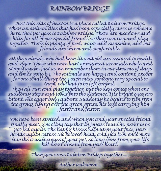graphic relating to Rainbow Bridge Poem Printable Version named Printable Rainbow Bridge For Canine Rates of the Working day