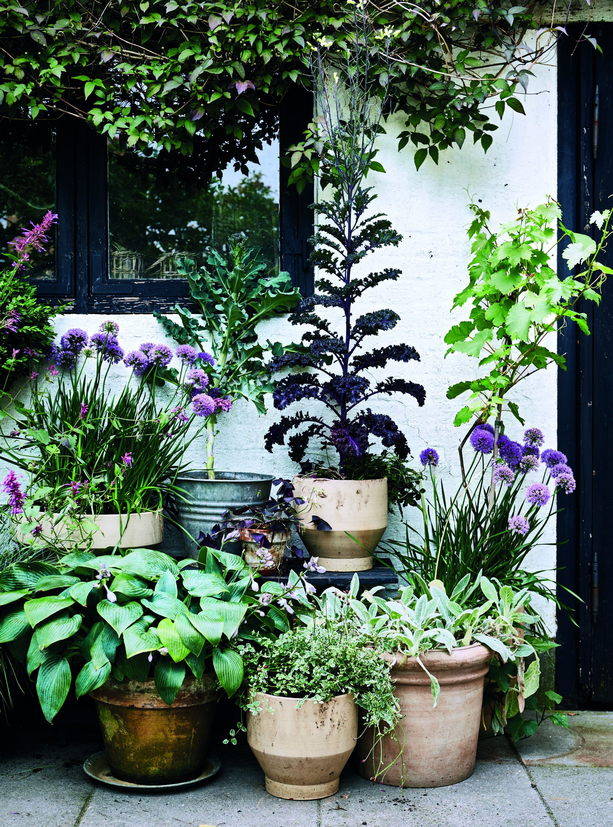 Learn to container garden