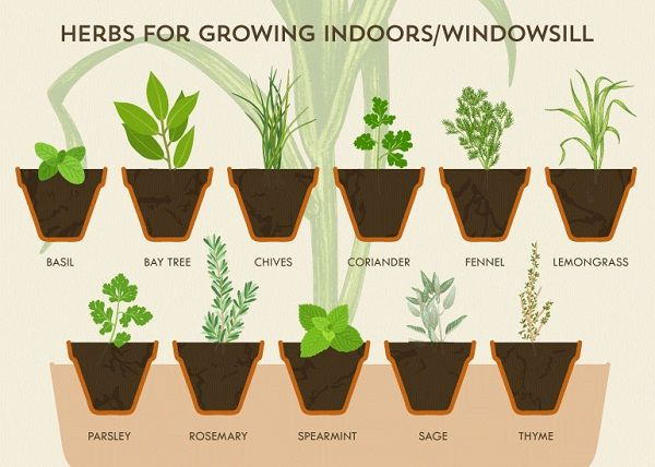 Infographic A Cheat Sheet For Growing Your Own Herbs At Home