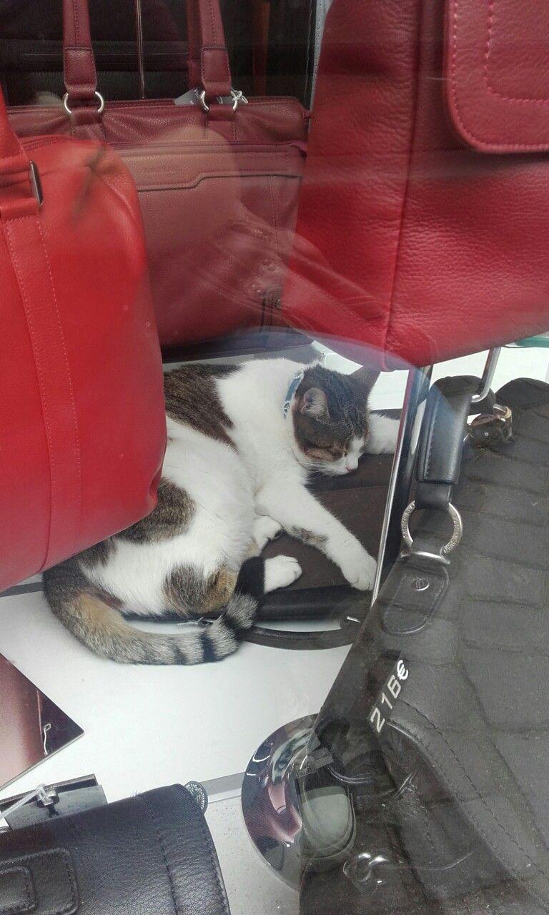 Chat dans une maroquinerie ^^