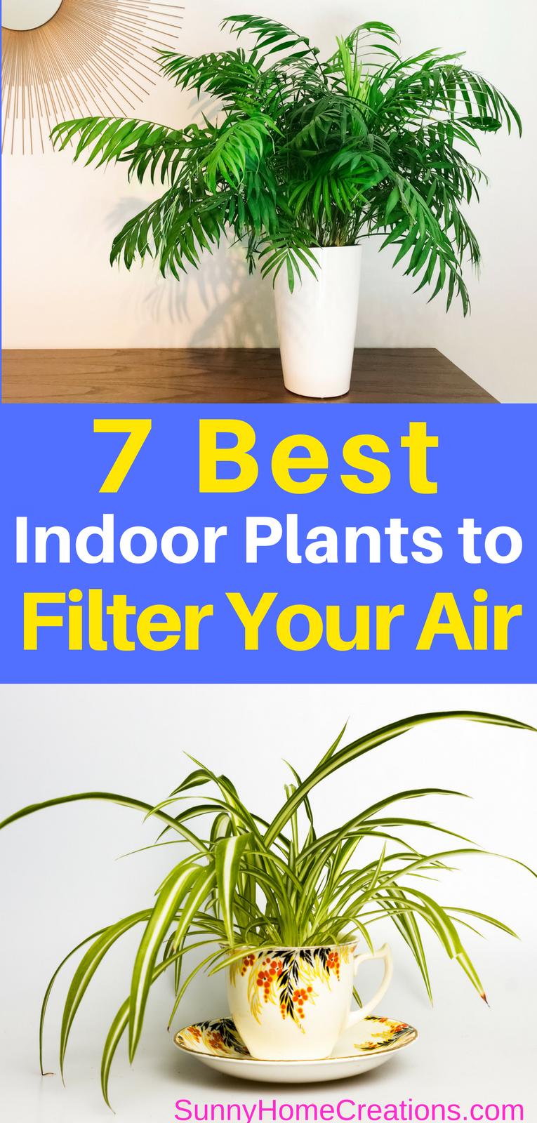 7 Best Indoor Plants to Filter your Air Best indoor