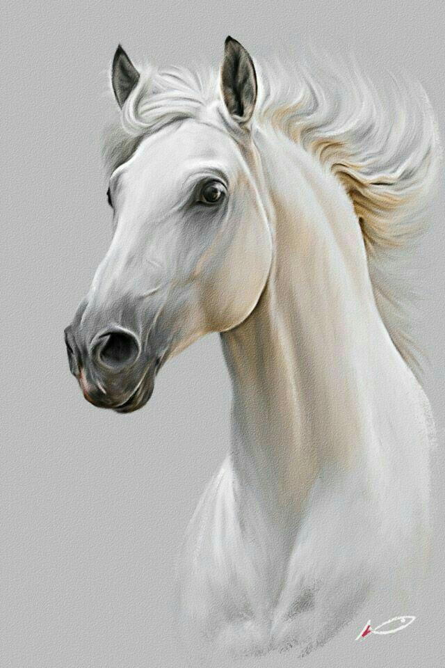 Pin by mehtap Kaynak on ATLAR   Pinterest   Horse, Horse art and ...