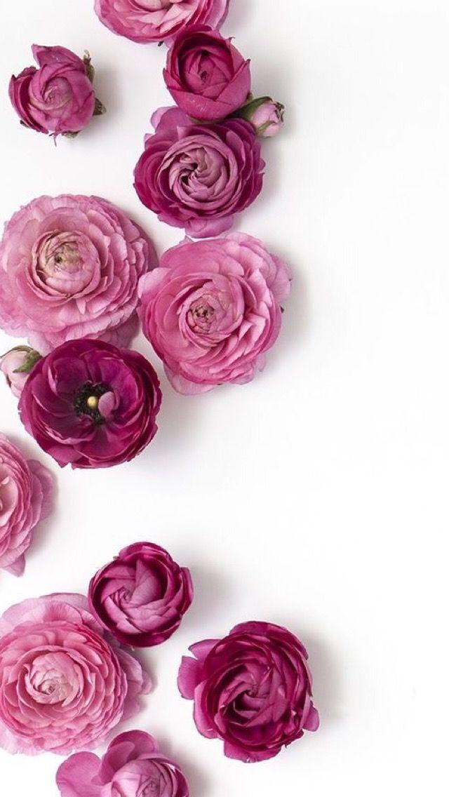 Oboi Iphone Wallpaper Flowers Fioletovye Piony Rozovye Piony I