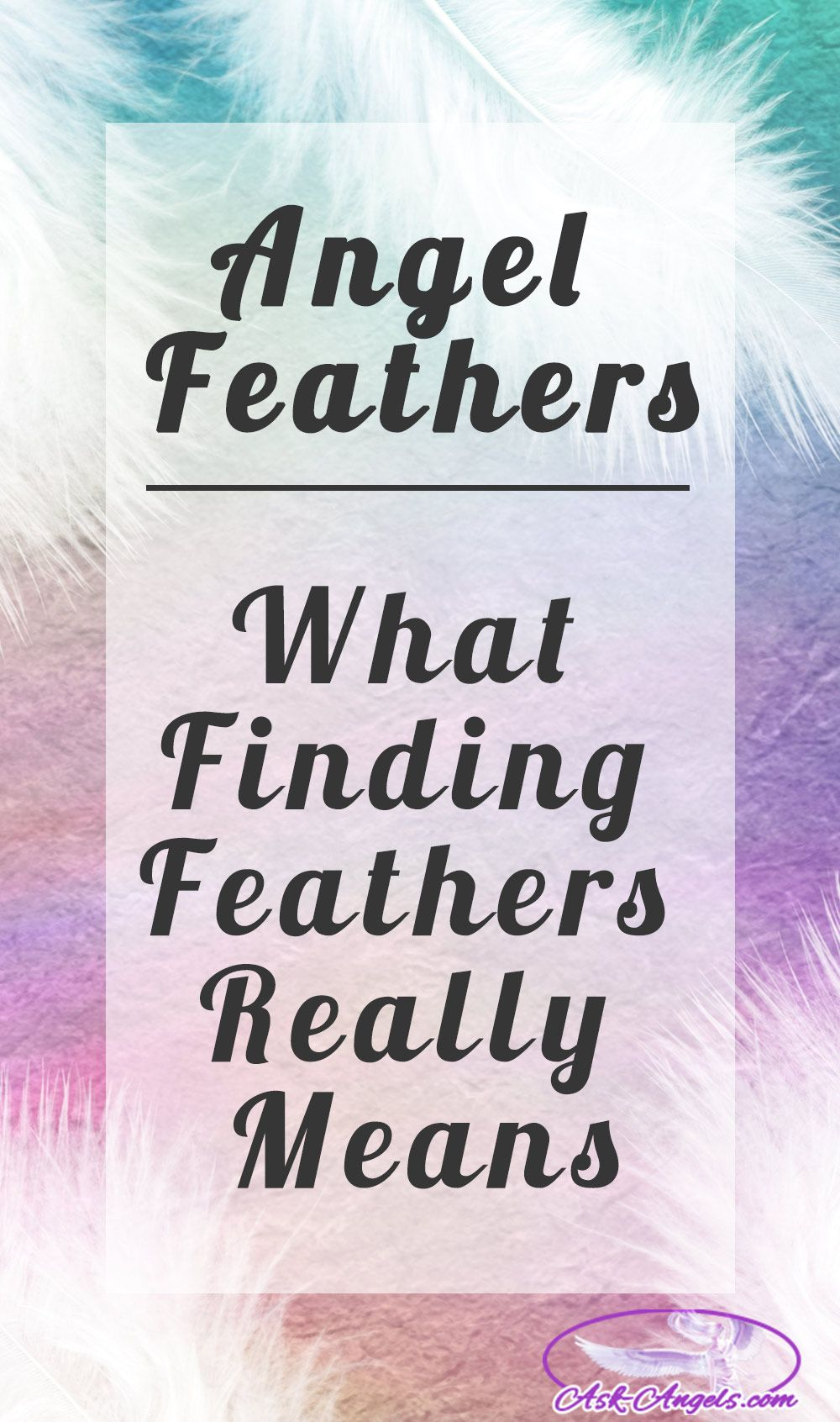Learn Angel Feather Meanings What Do White Feathers Mean Feather Meaning Finding Feathers White Feather Meaning
