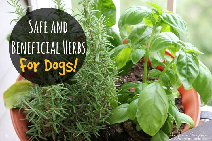 Herbs – Which are Safe and Beneficial for Dogs | http://www.beaglesandbargains.com/herbs-safe-beneficial-for-dogs/