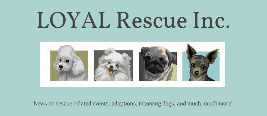 Loyal Rescue Inc In Peterborough Ontario Http Www Loyalrescue