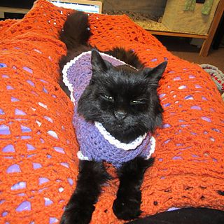 Kitty Cat or Small Dog Crochet Sweater #dogcrochetedsweaters
