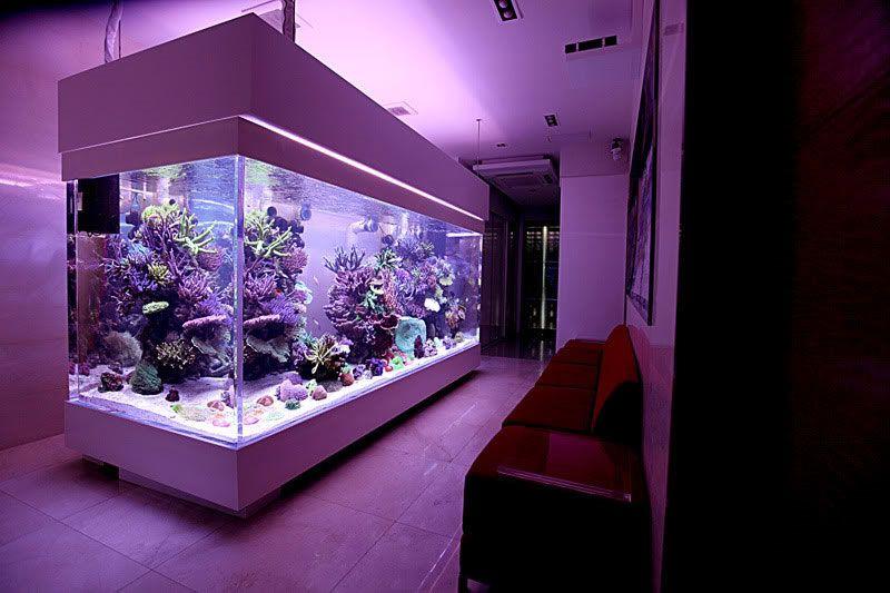 Aquariums Saltwater Fish Tanks Dream Aquariums Aquariums