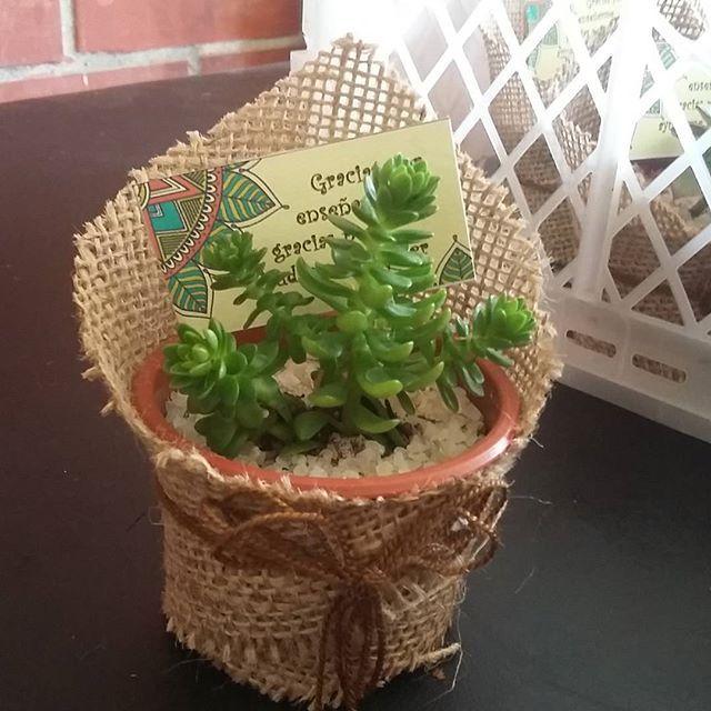 Recuerdos De Bautizo Con Cactus.Recuerdo Dia Del Profesor Recuerdos Minicactus Suculentas