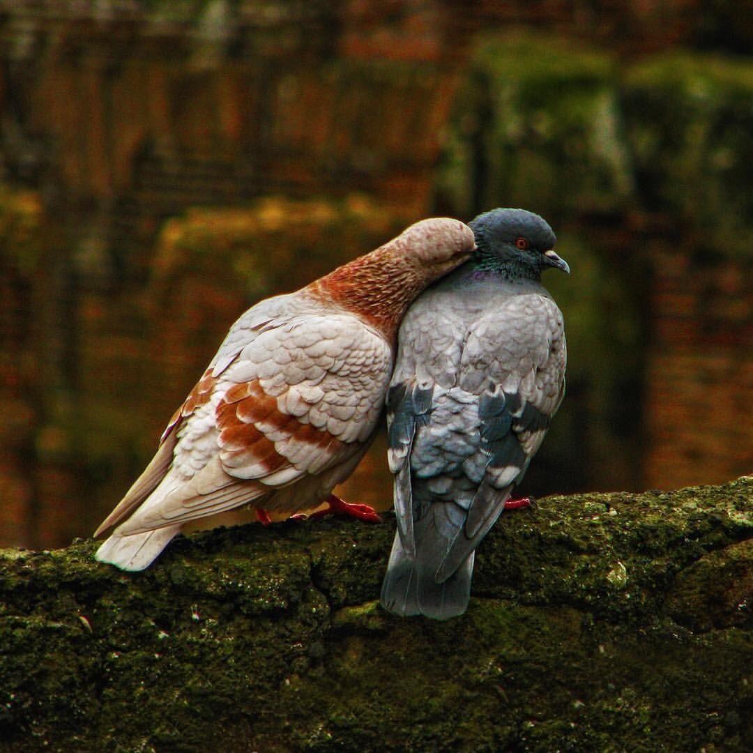 Dream to Me, Beautiful Bird