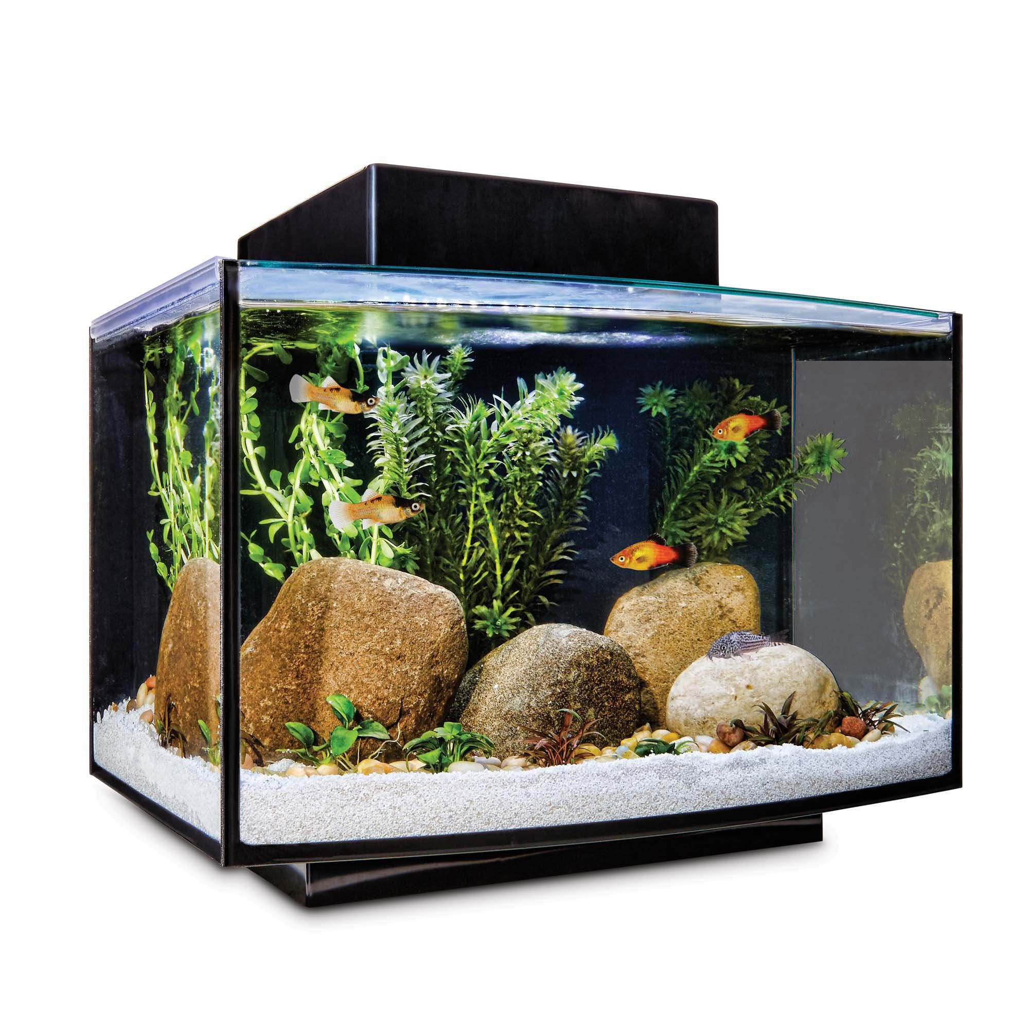 Imagitarium Platform Freshwater Aquarium Kit 6 6 Gal Freshwater Aquarium Aquarium Fresh Water Fish Tank