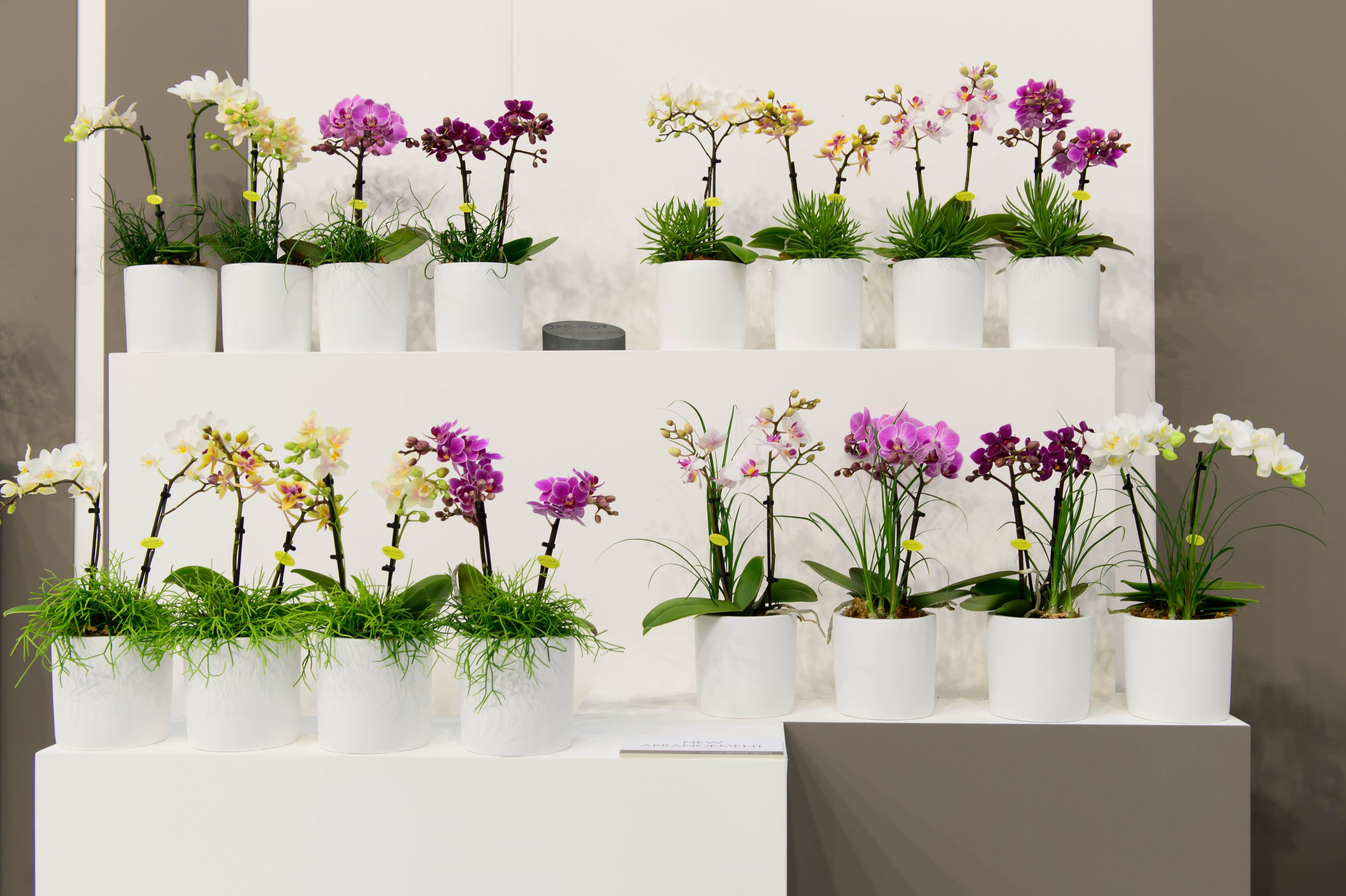 botanic look #trend2017 #dutch #design #home #accesoires #trendy #homefeeling #plant