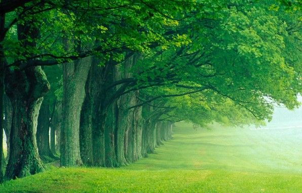 Image Result For Nature Pictures For Screensaver Green Nature Wallpaper Hd Nature Wallpapers Nature Desktop Wallpaper