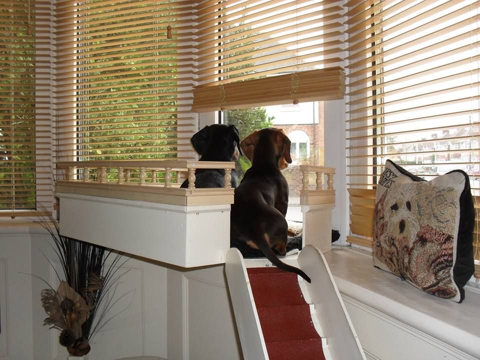 Pin By Trained Cat Happy Cat On Doxie Love Dog Window Dog