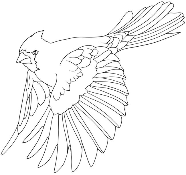 Welcome To Dover Publications Bird Drawings Bird Coloring Pages Animal Coloring Pages