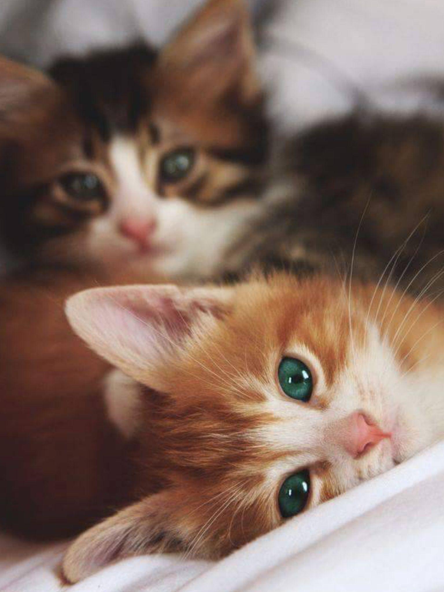 pěkné velké kočička fotky
