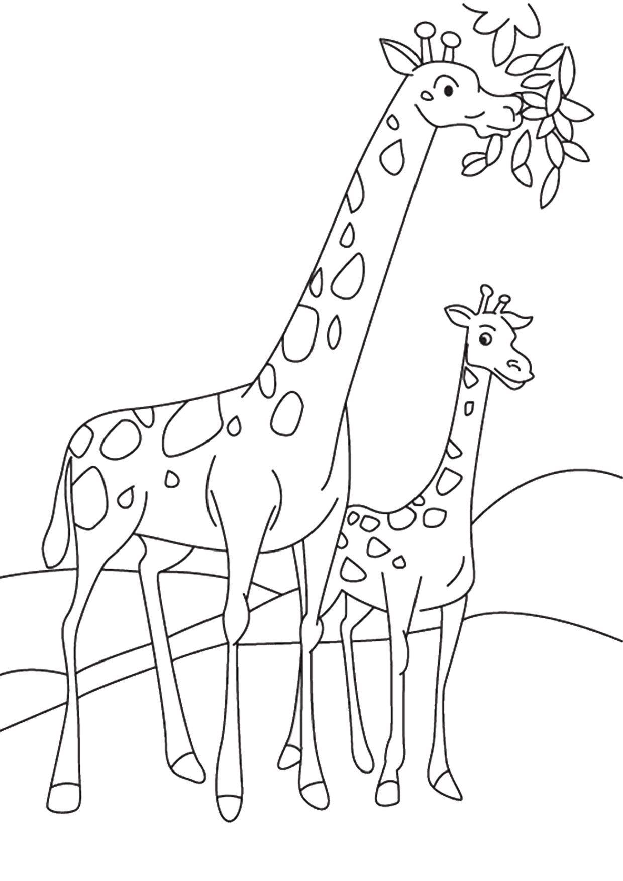 30 Disegni Di Giraffe Da Colorare Disegno Giraffa Disegni Da