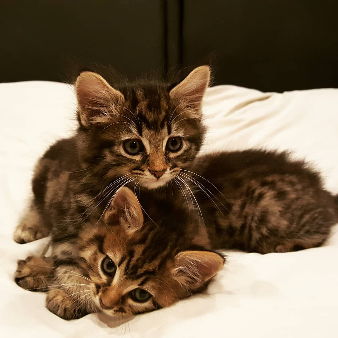 Stop With The Cute These Two Were Found In A Box Stuffed Under A Hedge We Call Them Bert And Ernie Kittens Cutest Cute Kittens