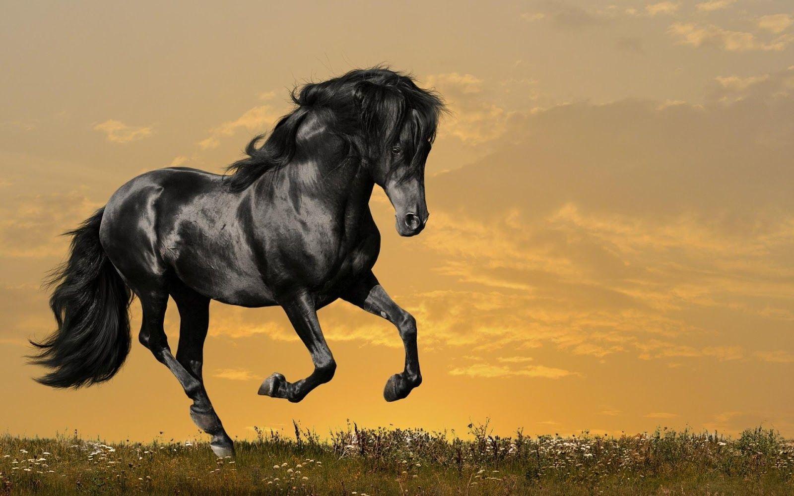 12 Amazing Black Horse Wallpapers Hd Tapandaola111 Horse Wallpaper Beautiful Horses Horses